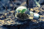A small green plant grows in a light bulb lying on the floor outdoor in the nature. The light bulb symbolises new research ideas, the growing plant represents a new, fruitful cooperation.